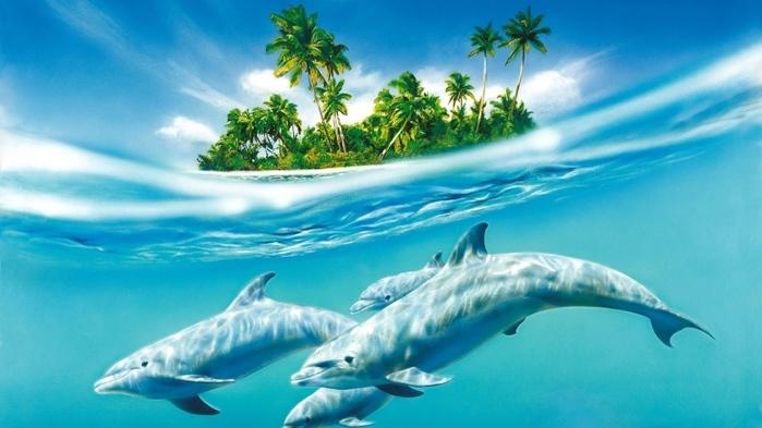 delfiny-v-lazuri-774x435 (700x393, 120Kb)