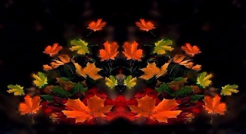 веер листьев12 (500x273, 126Kb)
