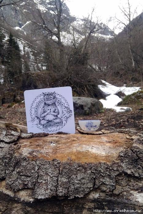 йога-Кот от Shraddha (11) (466x700, 336Kb)