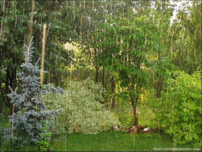 Дождь (700x525, 395Kb)