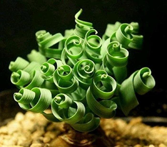 домашние цветы суккуленты 4 (700x617, 320Kb)