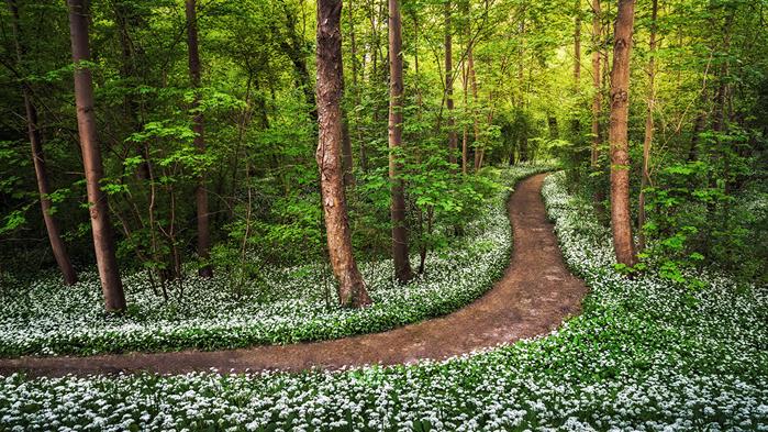 5177462_Forests_Trunk_tree_Trail_483906 (700x393, 320Kb)