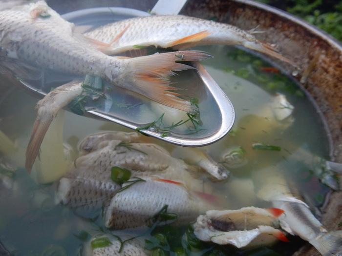 сварочного брак рыба с рыбой гадание отзывам вопрошающих
