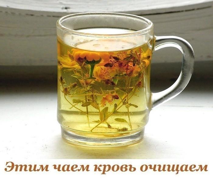 5283370_chai_lechebnii (700x594, 93Kb)
