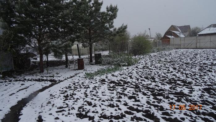DSC03529сосны и огород в снегу (700x394, 147Kb)