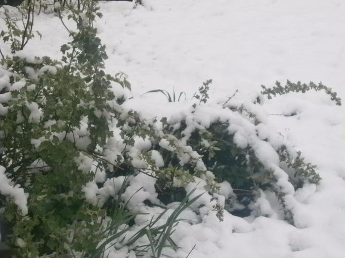 снегапрель7 (700x525, 249Kb)