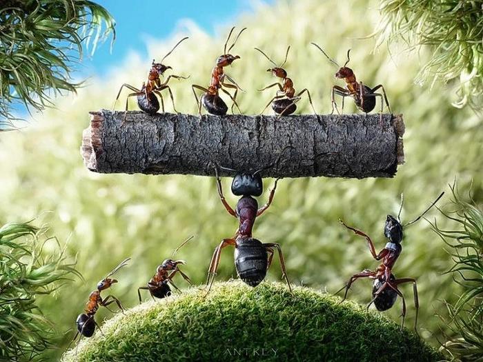 ants-10 (700x525, 87Kb)