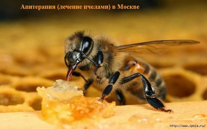 """alt=""""Апитерапия (лечение пчелами) в Москве""""/2835299_Apiterapiya_lechenie_pchelami_v_Moskve (700x436, 182Kb)"""