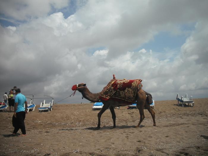 7 Верблюд с кошельком (700x525, 130Kb)