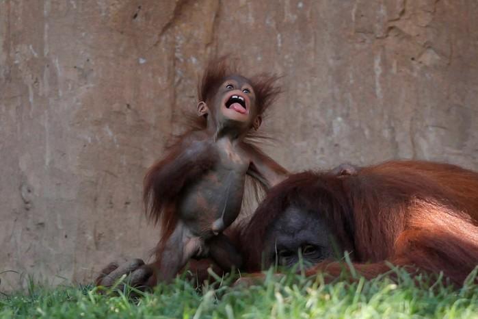 Как интересно выглядят детеныши некоторых животных!