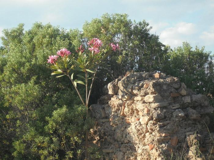 2 цветы и (700x525, 139Kb)