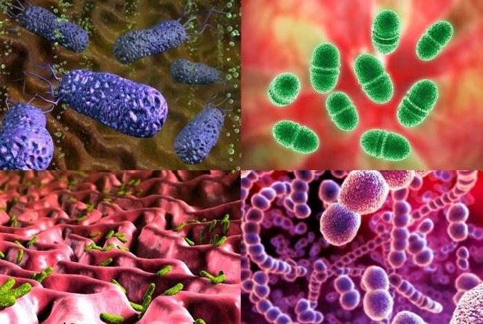 Ученые узнали, как «нюхают» бактерии