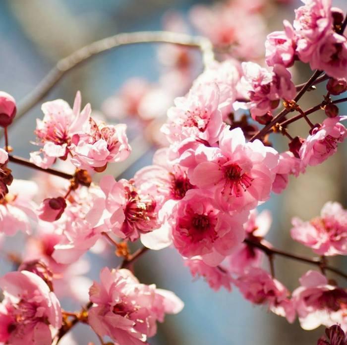 эти ли цветы (700x696, 60Kb)