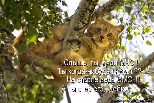 1492793691_kotomatrica-6 (500x333, 203Kb)