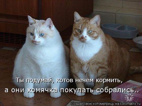 1492793736_kotomatrica-11 (500x375, 155Kb)