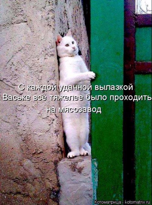 1492793745_kotomatrica-9 (500x674, 364Kb)