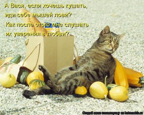 1492793753_kotomatrica-13 (500x400, 225Kb)
