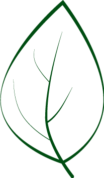 листик-без-цвета (207x355, 8Kb)