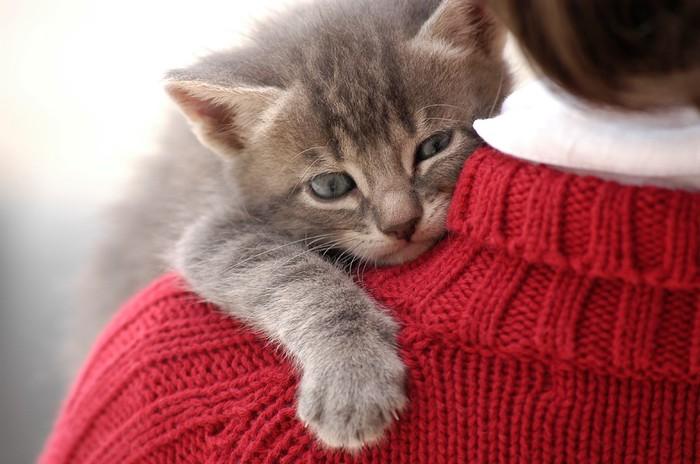 Необычная работа   обнимать кошек в Дублине