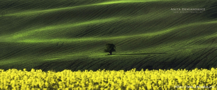 South-Moravian-Region-26-11 (700x291, 204Kb)