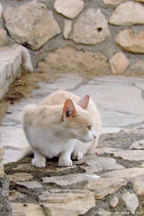 Котики Киприотики (3) (466x700, 261Kb)