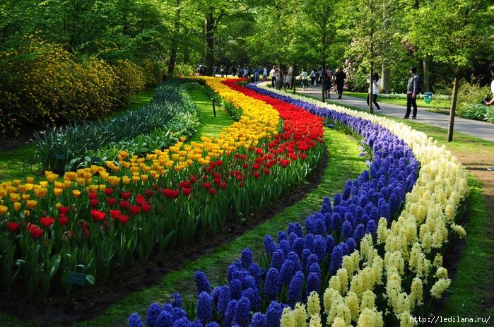 Парк цветов в амстердаме
