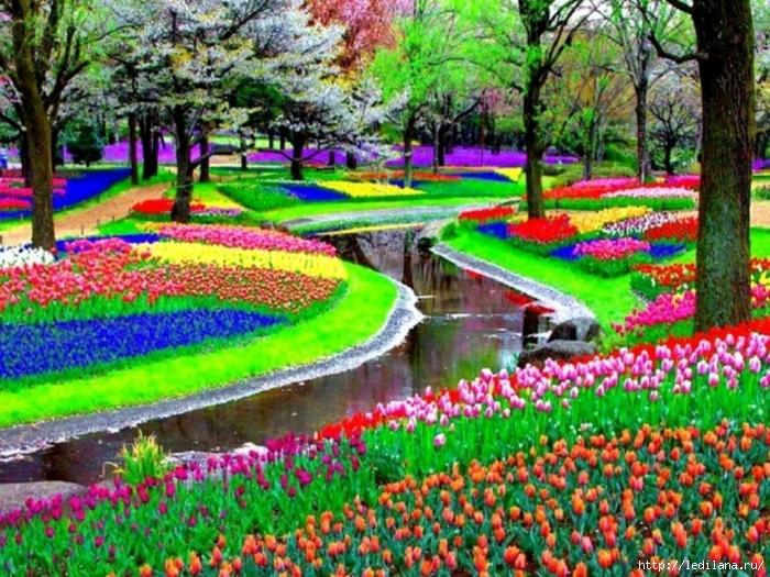 3925311_Park_cvetov_Kekenhof_Niderlandi_15 (700x525, 386Kb)