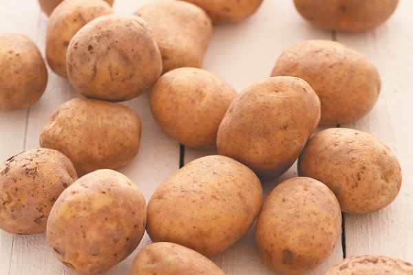 Вредители картофеля и методы борьбы с ними/4512595_ (600x400, 19Kb)