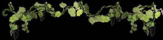 виноград 1 (520x130, 85Kb)