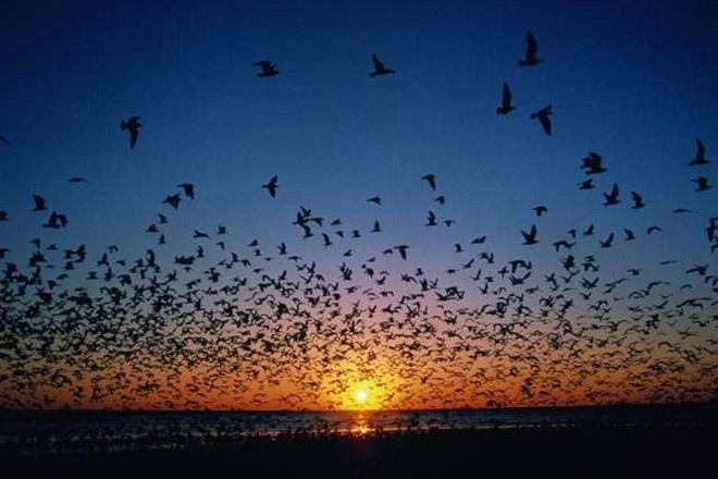 Birds_211107 (660x440, 96Kb)