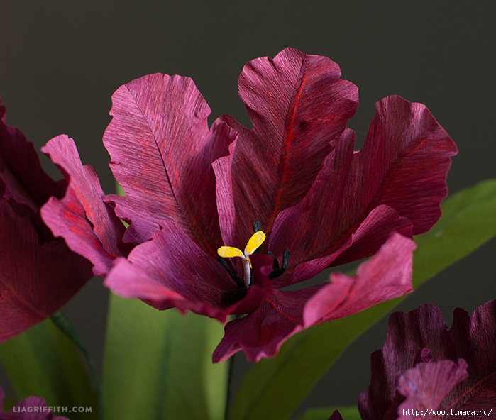 Crepe_Paper_Parrot_Tulip2 (700x592, 295Kb)
