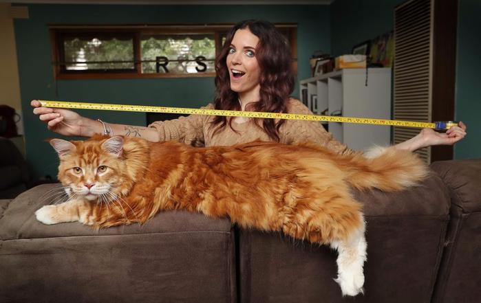 кот омар самый длинный кот в мире 1 (700x441, 281Kb)