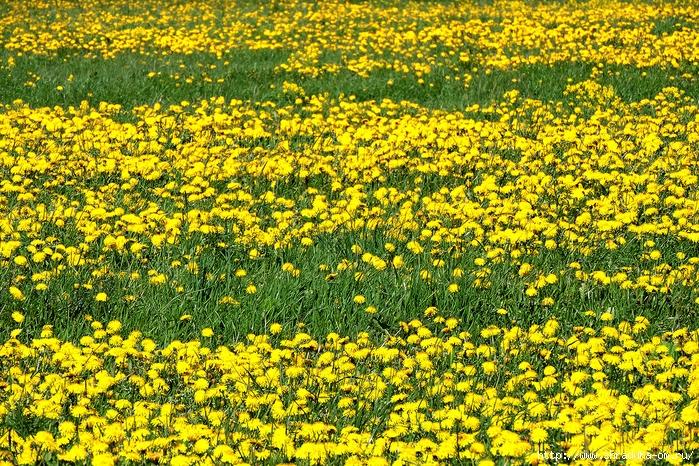 цветы, июнь 2017 (27) (700x466, 545Kb)