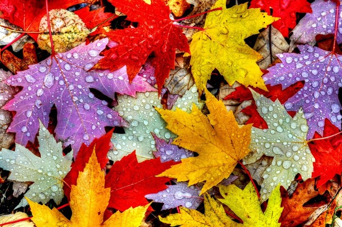Почему осенью листья окрашены по разному? Ксантофил, каротин и другие пигменты