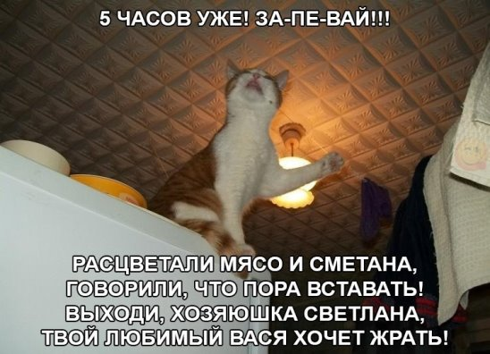 image (548x396, 51Kb)