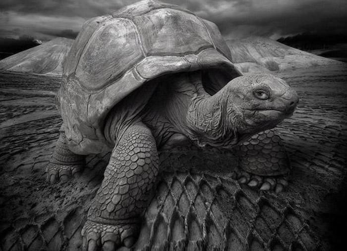 Какие животные живут дольше 100 лет