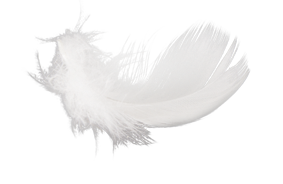 feather_PNG12975.png1 (283x184, 58Kb)