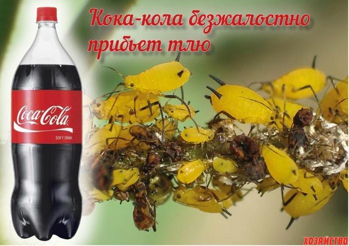 koka_kola-protiv-tli.-tlya (700x494, 369Kb)