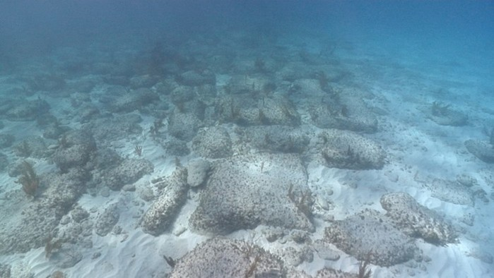 Удивительные  факты об океане!