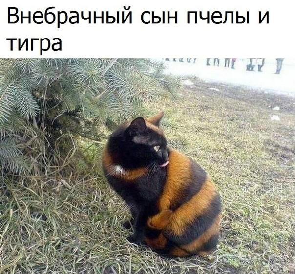 image (604x562, 132Kb)