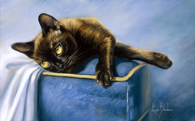 1390416027_lucie-bilodeau-cats-23 (640x396, 246Kb)