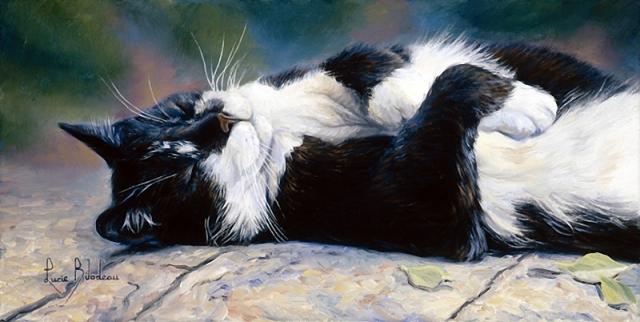 1390416125_lucie-bilodeau-cats-34 (640x322, 231Kb)