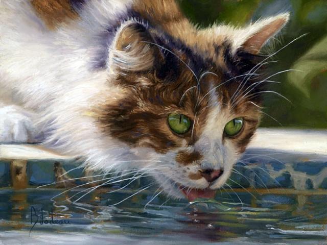 1390416189_lucie-bilodeau-cats-36 (640x480, 331Kb)