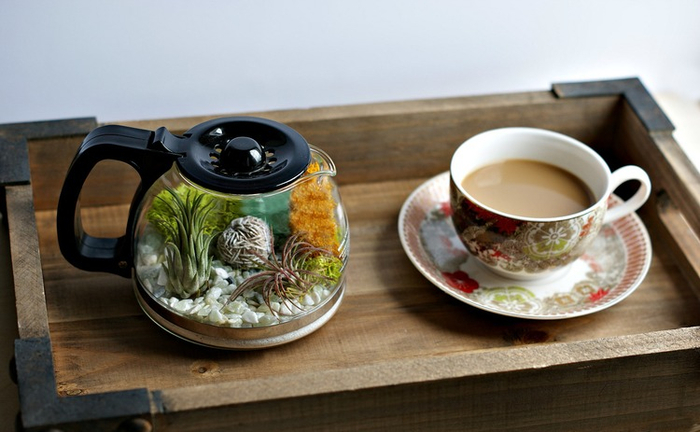 Plants+and+Coffee+--+Let's+make+a+coffee+pot+terrarium (4) (700x432, 270Kb)