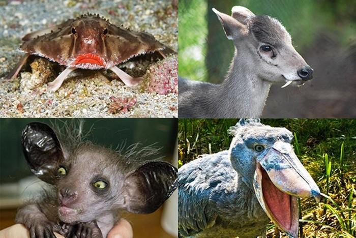 Самые страшные животные мира