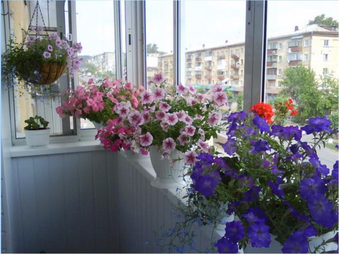 988470_petunya-na-balkone (700x525, 399Kb)