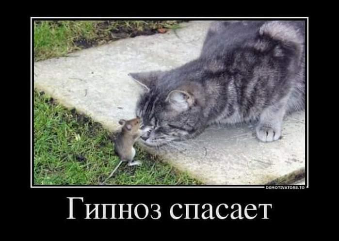 FB_IMG_1497102283335 (700x497, 39Kb)