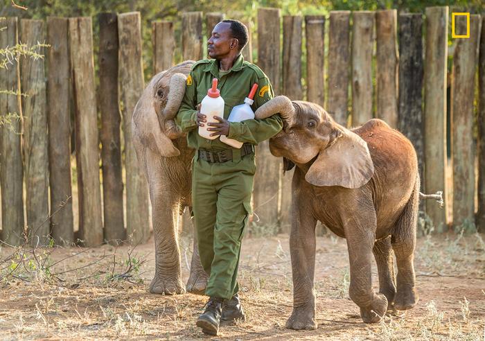 приют для слонов в кении 1 (700x492, 499Kb)