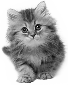 kitten_cat_2 (239x300, 91Kb)