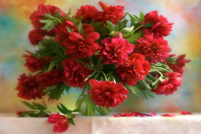 Red-Peony-Flower-font-b-China-b-font-Still-font-b-Life-b-font-Poster-Painting (700x466, 81Kb)